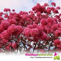 Lapacho fa virágzata