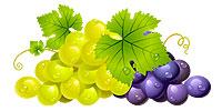 szőlőfürtök