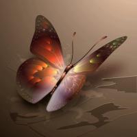 megbocsátás pillangója