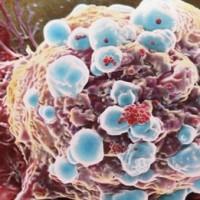 nanorészecske