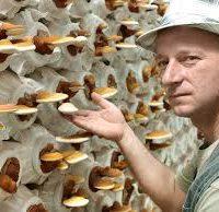 Gyöngyösi Sándor és a bio gombák